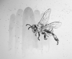 Aug 20 For the Love of Honey - Bee