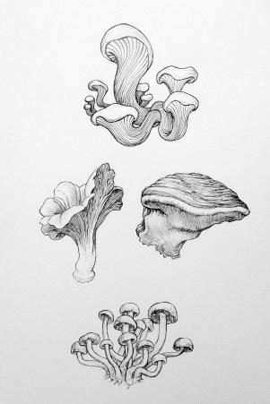 Feb 4 Stuff Em - Mushrooms