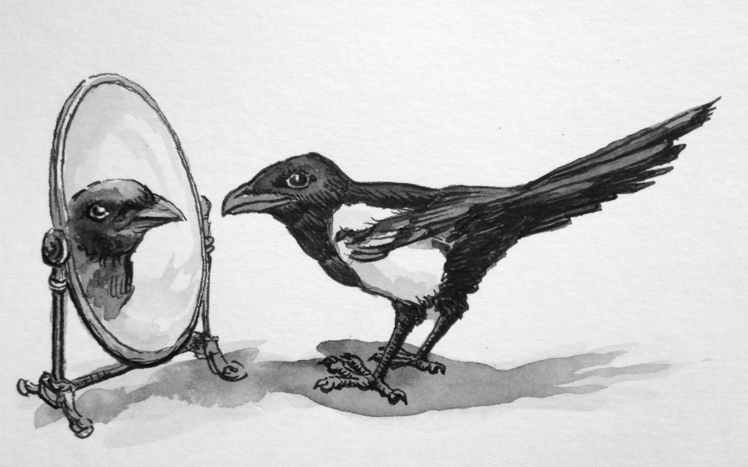 Oct 1 Respect for Animal Intelligence - Magpie
